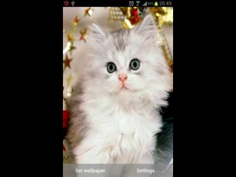 Video of Cute Kittens Wallpapers