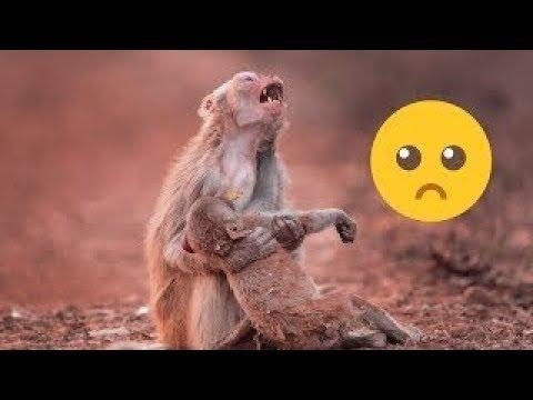 العرب اليوم - شاهد: حيوانات تبكي مثل البشر