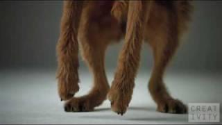 Pedigree и медленные собаки