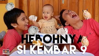Video Kids Brother - Hebohnya Si Hamster Kembar 9 Berebut Makanan MP3, 3GP, MP4, WEBM, AVI, FLV Januari 2019