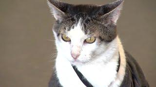 Gato de rua vira gerente geral de loja de enxovais em Ibitinga