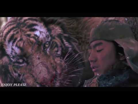 Tiger VS Wolf Fight Scene  HD