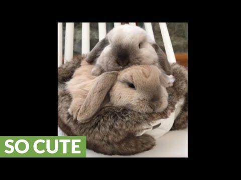 dolcissimi-coniglietti