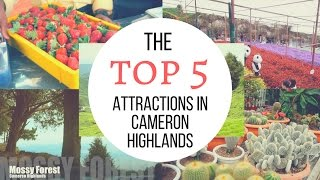 Cameron Highlands Malaysia  city photo : Top 5 Attractions in Cameron Highlands │ Travel Malaysia Guide