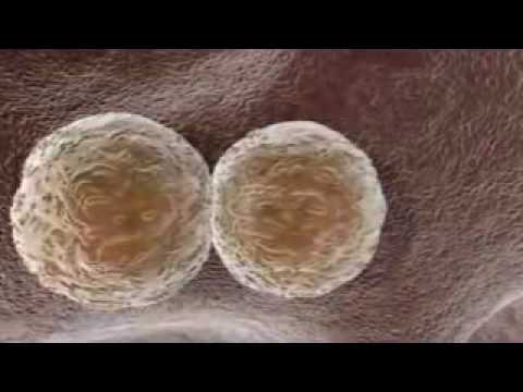 stem - Video on how stem cells work and develop.