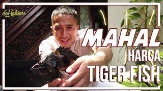 Video MAHAL nya HARGA TIGER FISH MP3, 3GP, MP4, WEBM, AVI, FLV April 2019