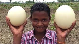 Video Cooking The world's Biggest Egg - Ostrich Scrambled Eggs with Vegetables - Ostrich Egg Podimas MP3, 3GP, MP4, WEBM, AVI, FLV Juli 2018