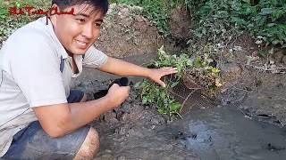 Video Mới đặt xuống mà cá đã vô lờ nhảy thấy mà ham  Catch fish in Viet Nam countryside MP3, 3GP, MP4, WEBM, AVI, FLV Maret 2019