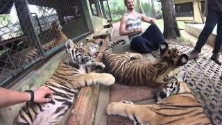 Playing With The Tigers At Tiger Kingdom Chiang Mai