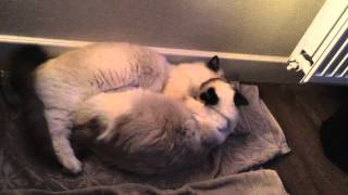 Mauws en Mimi lekker kroelen