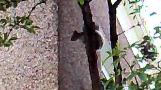 Уникална Пееща катерица!!!