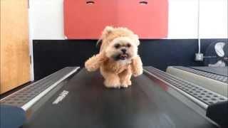 A Dog Dressed As A Teddy Bear On A Treadmill Will Get You Through This Week