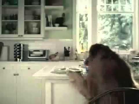 Perro Gato Pepsi