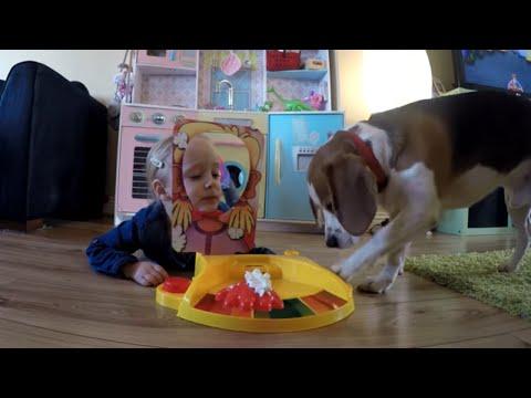Pies gra w Pie face