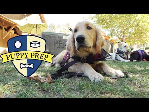 The Puppies Go To The Farm (видео)