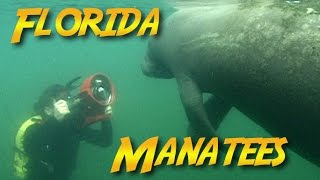 In this season 1 re-release, Jonathan travels to Florida to learn about the West Indian Manatee and the threats it faces from boat strikes, and habitat loss as well as efforts to protect and save the manatee.JONATHAN BIRD'S BLUE WORLD is an Emmy Award-winning underwater science/adventure program.**********************************************************************If you like Jonathan Bird's Blue World, don't forget to subscribe!Support us on Patreon!http://patreon.com/BlueWorldTVYou can buy some Blue World T-shirts & Swag!http://www.blueworldtv.com/shopYou can join us on Facebook!https://www.facebook.com/BlueWorldTVTwitterhttps://twitter.com/BlueWorld_TVInstagram@blueworldtvWeb:http://www.blueworldTV.com**********************************************************************
