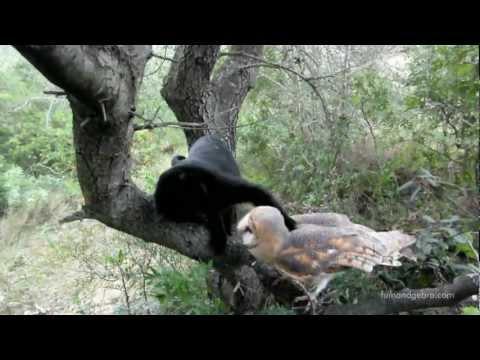 Un búho y un gato, mejores amigos