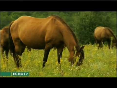 Kalandozás a ménesek világában – a hucul ló