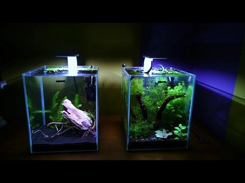 My Natural Shrimp Tank - Day 129 - Cristal Red/Black HD (видео)