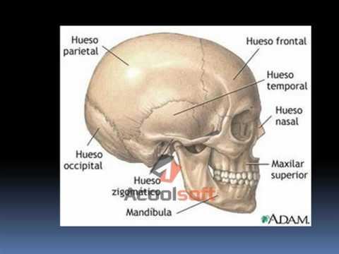 Generalidades anatomía 1