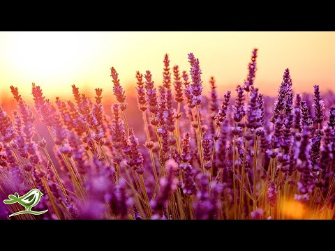 Relaxing Piano Music: Relaxing Music, Study Music, Romantic Music, Sleep Music ★128