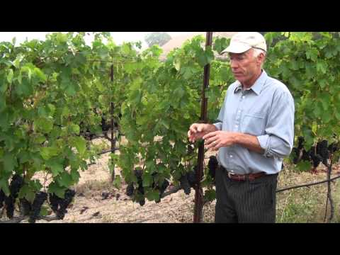 What Can You Use in Organic Grape Growing