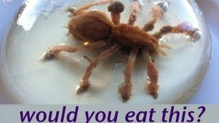 WOULD YOU EAT A SPIDER? Food Art Jello Art HOW TO COOK THAT Ann Reardon