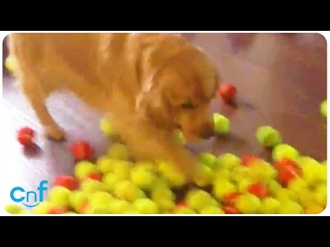 best dog birthday ever - 800 tennis balls