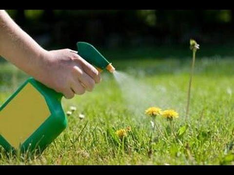 come eliminare le erbacce dal proprio giardino in modo naturale!