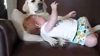 Bebê Morrendo De Rir Com Lambida Do Cachorro