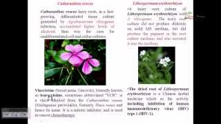 Plant tissue culture: root tip culture