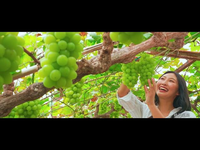 岡山の旅なら叶う! 贅沢&美味な果物時間