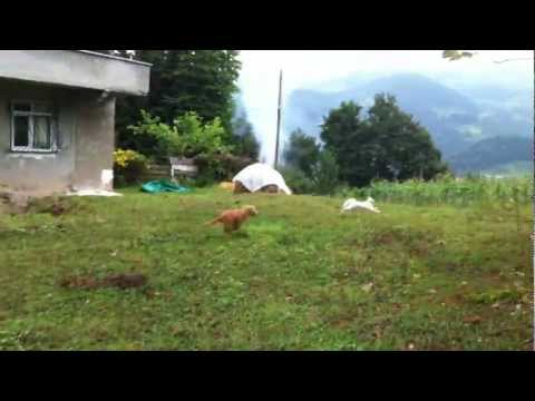 Funny Friday - Dog outsmarted by cat