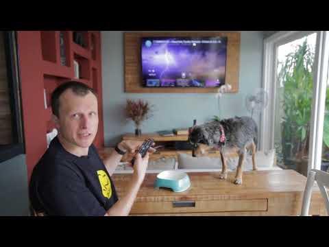 Video Como treinar o seu cachorro para não ter medo de fogos de artificio download in MP3, 3GP, MP4, WEBM, AVI, FLV January 2017