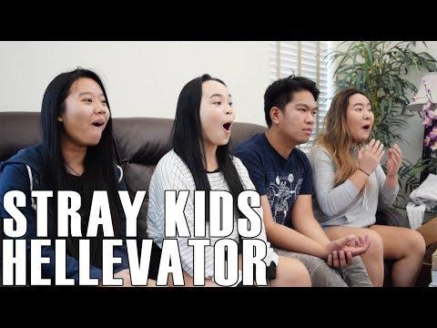 Video Stray Kids - Hellevator (Reaction Video) download in MP3, 3GP, MP4, WEBM, AVI, FLV January 2017