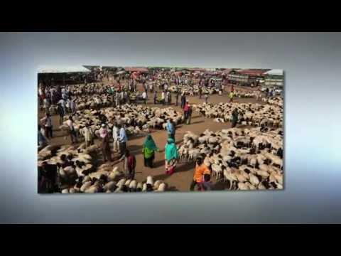 Sustainable Livelihoods in Marsabit