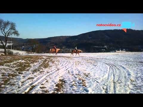 Koně v Luhačovicích