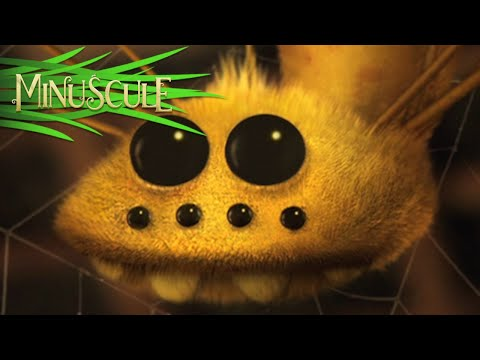 Minuscule - Season 1 (20 minutes Compilation) #1 (видео)