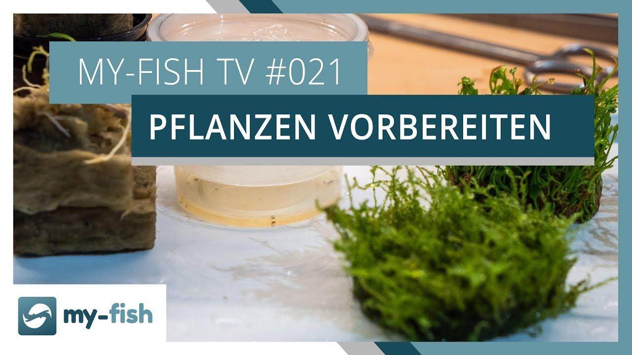 my-fish TV - Deine Nr. 1 Anlaufstelle für alle Themen rund um die Aquaristik 43