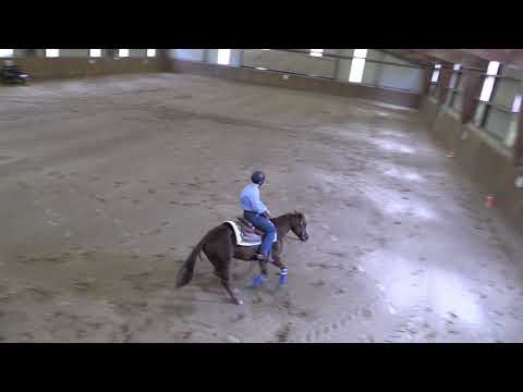 Campeonato Navarro de Reining 040519 Video 1