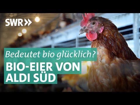 Bioeier von ALDI Süd: Die Mär von glücklichen Hühnern