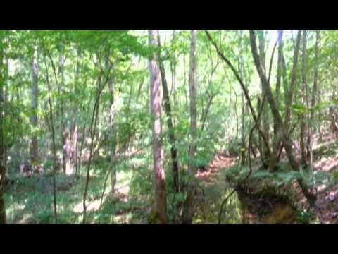 82 acres Talladega, AL