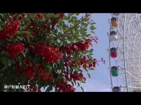 鮮やかな赤、南国ムード満点 淡路ワールドパークONOKORO