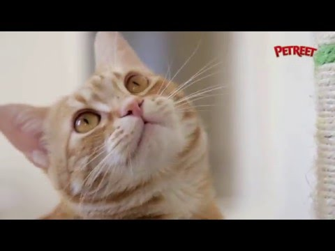Come creare il gioco perfetto per il tuo gatto