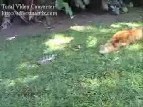 Tortuga vs. Gato