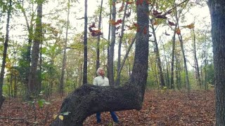 Video If You Find A Bent Tree In The Forest, You May Have Just Stumbled Upon A Centuries Old Secret MP3, 3GP, MP4, WEBM, AVI, FLV Desember 2018