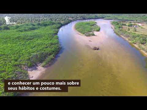Projeto Peixe-boi - Porto de Pedras - São Miguel dos Milagres