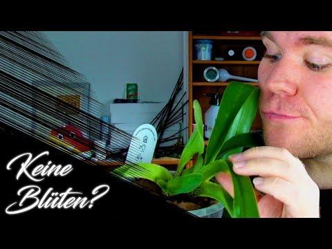 Hilfe, meine Orchidee blüht nicht! Warum?