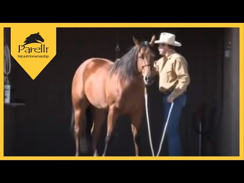 Parelli Natural Horse Training Tip - Standing to be Groomed