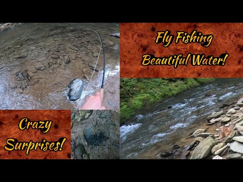 Day Full Of SURPRISES! Big Fallfish, saving tadpoles, And Scared By A Fawn!  (Fly Fishing For Trout)